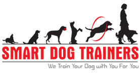 Smart Dog Trainers | Dog Training in Chennai | Dog Trainers