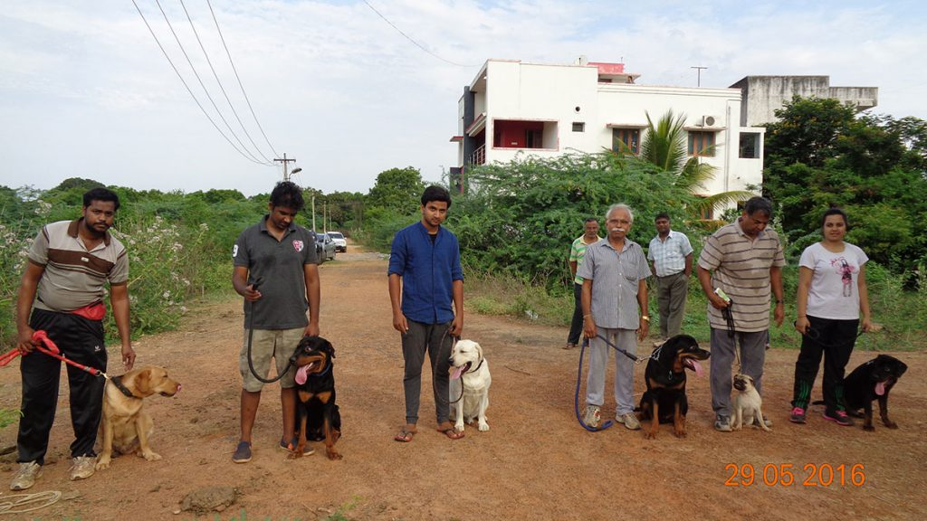 smart dog trainers in chennai