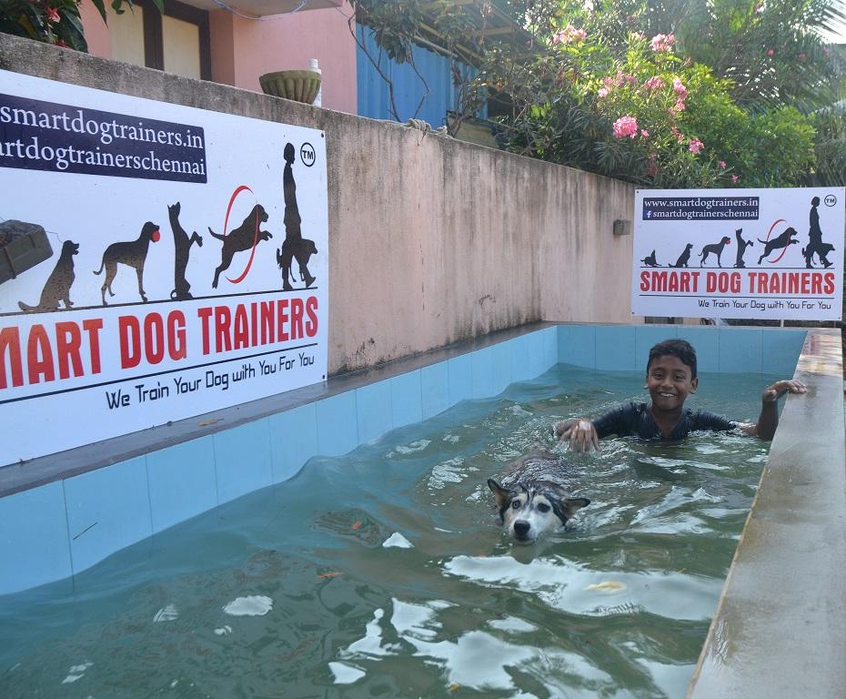 Dog Training at chennai