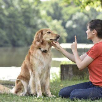 Dog-Obedience-Training_chennai